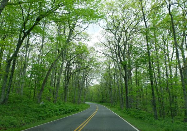 Shenandoah Trees Road Nature National Park
