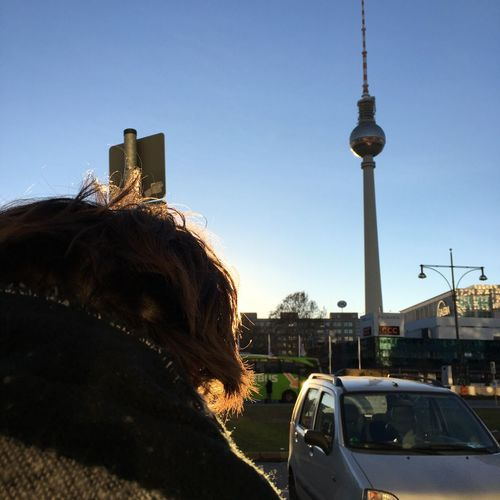 Capture Berlin Architecture Built Structure Sky Car City Mode Of Transport Building Exterior Transportation Clear Sky Outdoors Day Land Vehicle Tower Mammal