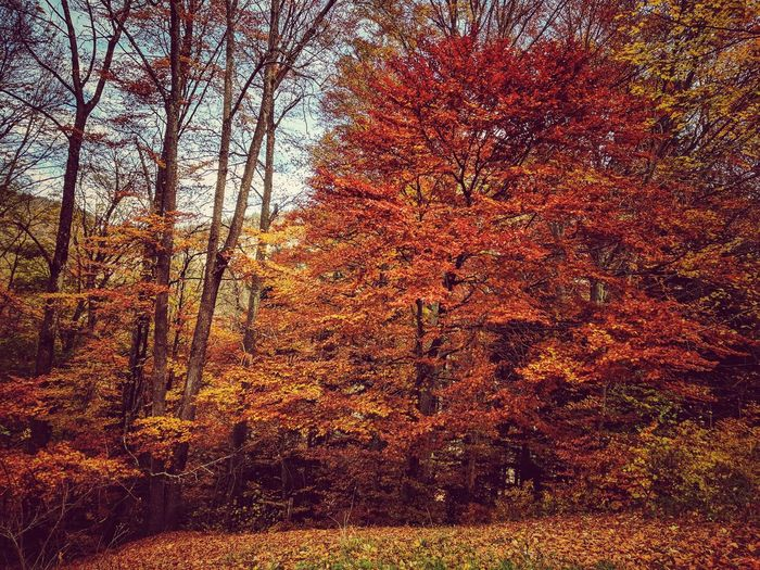 No People Nature Full Frame Tree Day Backgrounds Outdoors Beauty In Nature Close-up Sky Multi Colored Switzerland Nature Perspectives On Nature EyeEm Best Edits Tranquility Autumn Tree EyeEm Best Shots