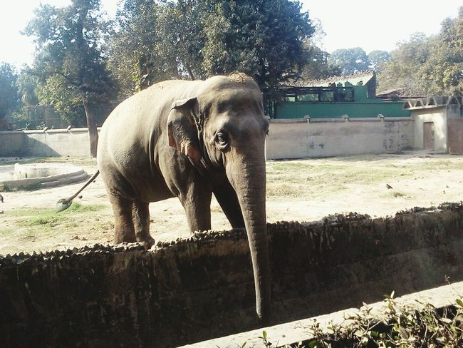 Elephant at Alipore Zoo Outdoors Nature Elephant Day Zoo
