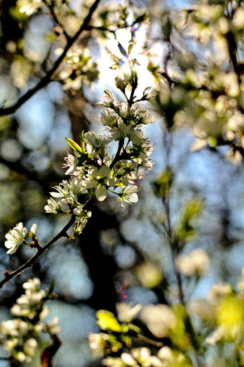 Growth Flower Tree Nature Beauty In Nature Springtime No People Outdoors Holidays Holiday Vacations Instagramer Streamzoofamily Landscape Streamzoo Eyeemphotography Photo Of The Week Munich München Bayern EyeEm Best Shots Tree Close-up Sunbeam Plant