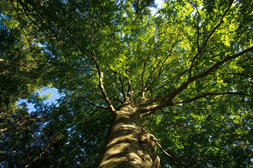 i am a tree Green Lost In The Landscape Relaxing Beauty In Nature Forest Green Color Growth Looking Up Nature Tree Tranquil Scene Tranquility