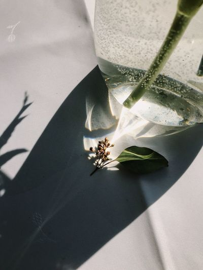 Plant Nature Shadow Close-up Leaf Growth Sunlight Spring Fleek Green Color Freshness High Angle View Beauty In Nature Flowering Plant Plant Part Flower No People Day Plant Flora Glass Glass - Material Vase Flowers Water Bubbles Shadows & Lights Tablecloth Spring Flowers Springtime Blossoms  White Color Still Life StillLifePhotography Sunray