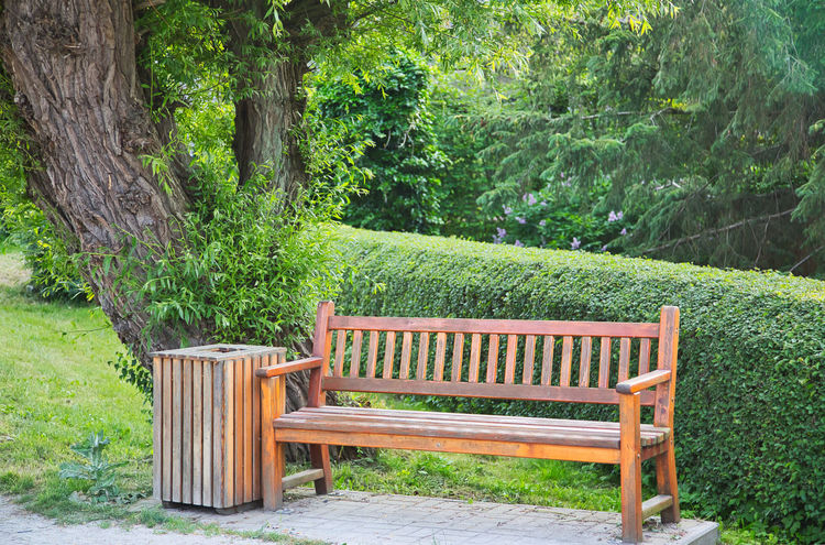 Wooden bench and waste bin under a tree in a park Absence Beauty In Nature Bench Day Empty Forest Green Color Growth Land Nature No People Outdoors Park Park - Man Made Space Park Bench Plant Seat Tranquility Tree Tree Trunk Trunk Wood - Material
