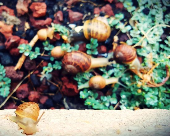 Plant Nature Growth No People Snails Having Fun Snails