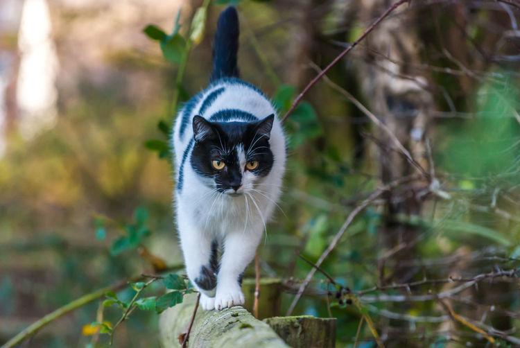 Close-Up Of Cat On Tree