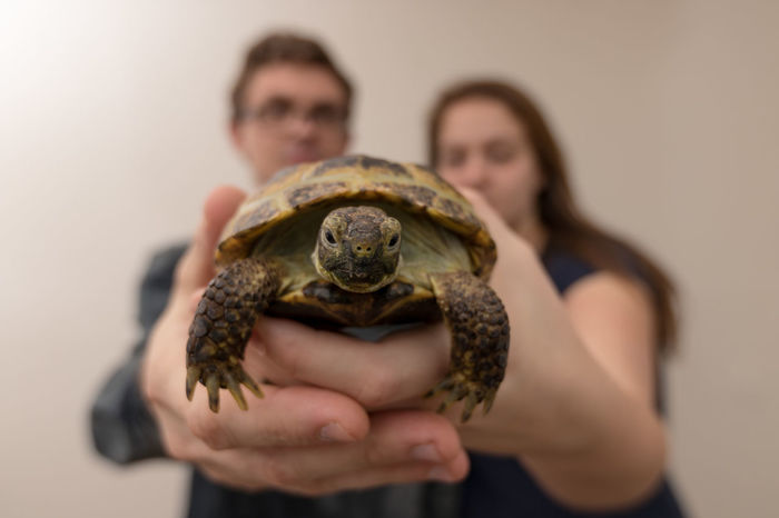 Couple Woman Adult Animal Wildlife Care Couple - Relationship Focus On Foreground Front View Hand Holding Human Hand Indoors  Men One Animal People Pet Owner Reptile Turtle Two People Vertebrate Women Inner Power