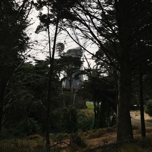 Golden Gate Park Windmill Tree Plant Growth No People Architecture Nature Built Structure