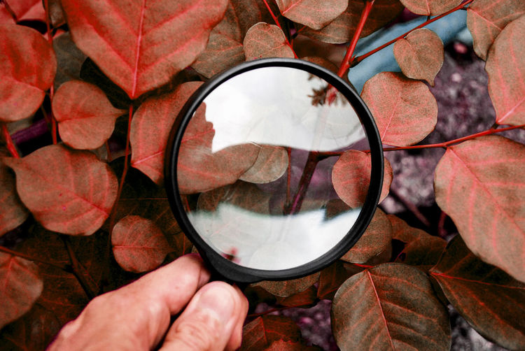 A man using a magnifying glass to look at the leaf