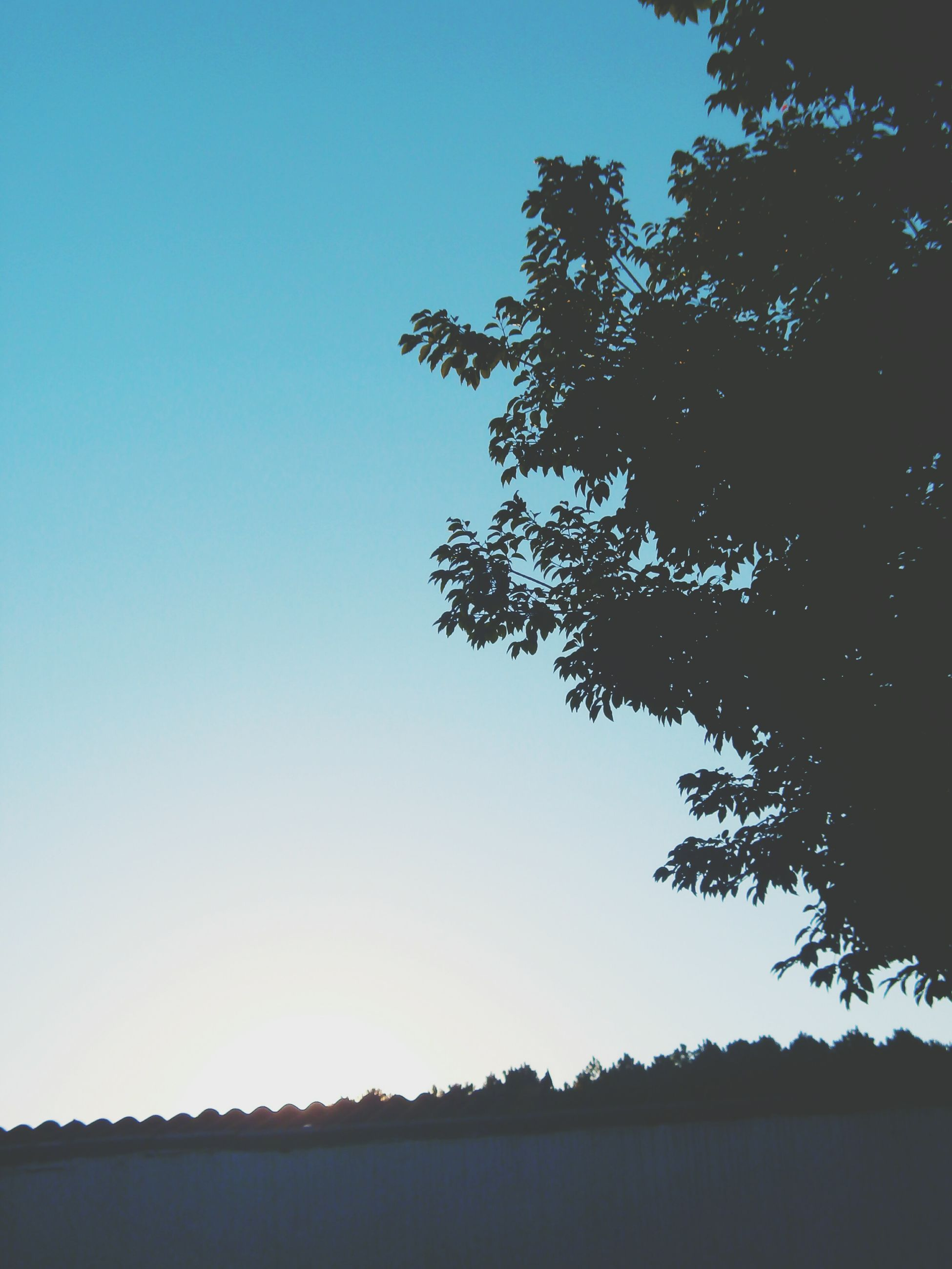 clear sky, copy space, tree, tranquility, tranquil scene, silhouette, scenics, beauty in nature, blue, nature, growth, landscape, branch, water, idyllic, outdoors, no people, dusk, lake, non urban scene