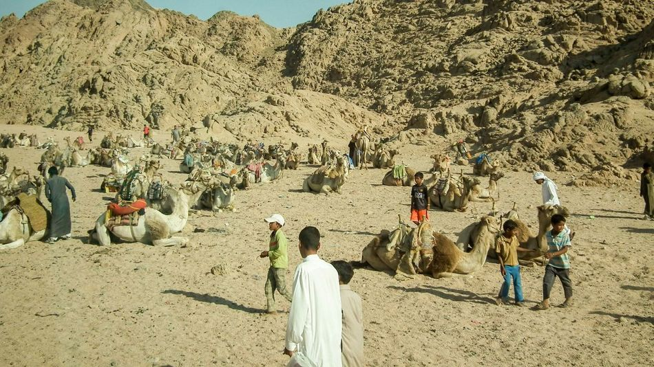 Egypt Sharm El-Sheikh Camels Sand Sinai Mountains Hills Sun Africa People People Watching Crowd Busy Desert Children Adults Culture Egyptian Egyptian People Colour Image Horizontal Real People Warm Barren Dry