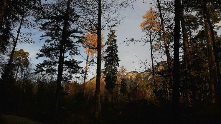 Mega Herbst🍁in Swizzerland Bäume Tree Schönes Wetter Herbst 2016 No People Beauty In Nature Sunset Fresh Nice Orang Berge