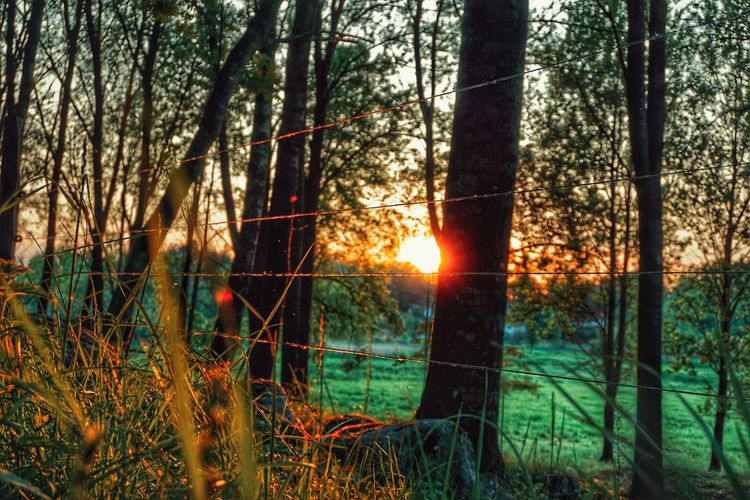 Fence 2019 Niklas Storm Juni Tree Sunset Forest Tree Trunk Sunlight Water Sun Sky Grass Tall Grass Countryside Growing Green Grassland Branch Woods The Great Outdoors - 2019 EyeEm Awards My Best Photo