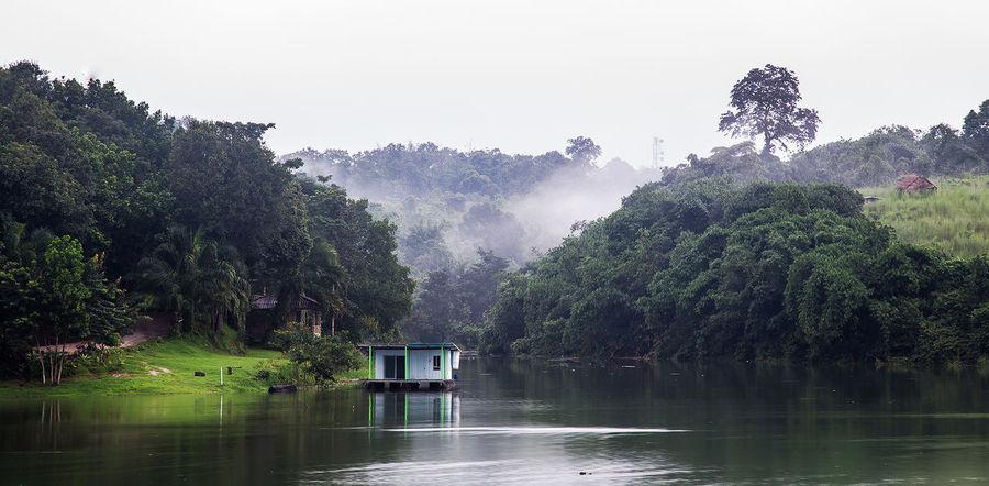 Tree Water Lake Sky Foggy Flood Stilt House