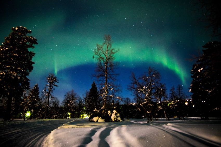 Aurora Aurora Borealis Northern Lights Finland Saariselkå Winter Snow Forest Night Trees Sky