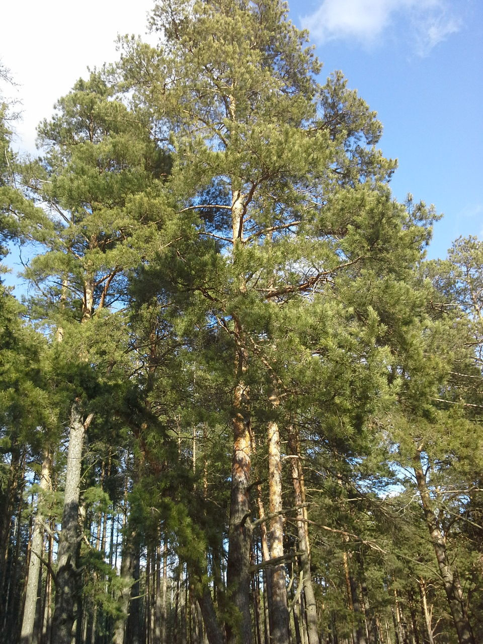 forest, nature, tree, growth, blue sky, no people, outdoors, day, beauty in nature