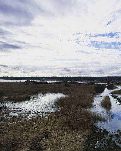 Swanlake Tysslinge Springtime Swanlake EyeEm Selects EyeEm Nature Lover Lake Water Salt - Mineral Sea Low Tide Beach Sky Cloud - Sky Landscape