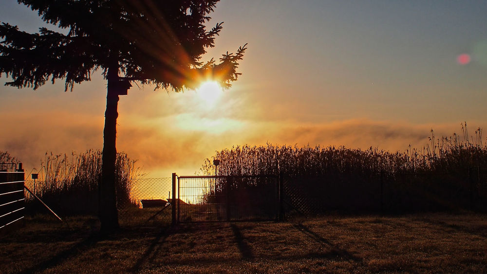Morgennebel  Nebelschwaden Sonnenaufgang Beauty In Nature Day Growth Morgenrot Nature No People Outdoors Scenics Sea Seeufer Sky Sunlight Sunset Tranquil Scene Tranquility Tree