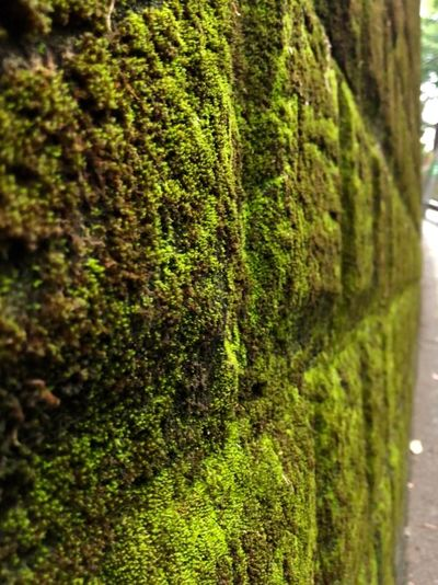 Moss on a wall.