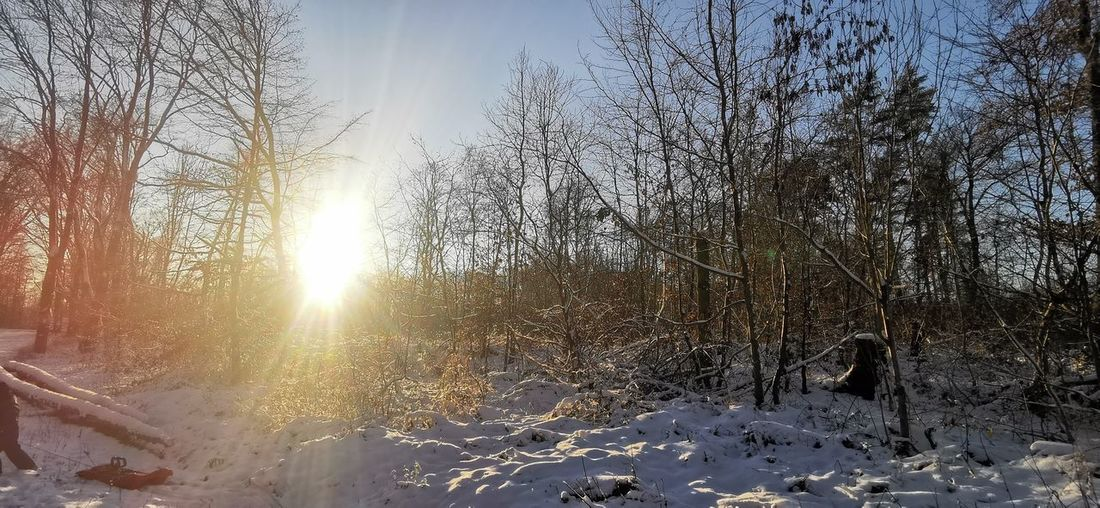 Sunlight streaming through bare trees during winter