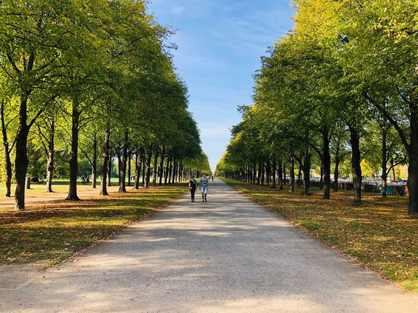 He walk Hannover Tree The Way Forward Plant Direction Growth Nature Diminishing Perspective Transportation Green Color vanishing point Beauty In Nature Park Outdoors Incidental People Sunlight Treelined Day Road Sky Tranquility
