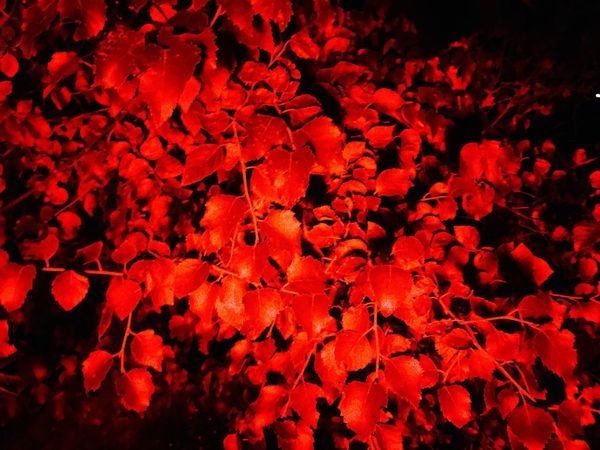 Creative Light And Shadow Taking Photos Red Nature Taking Photos Trees