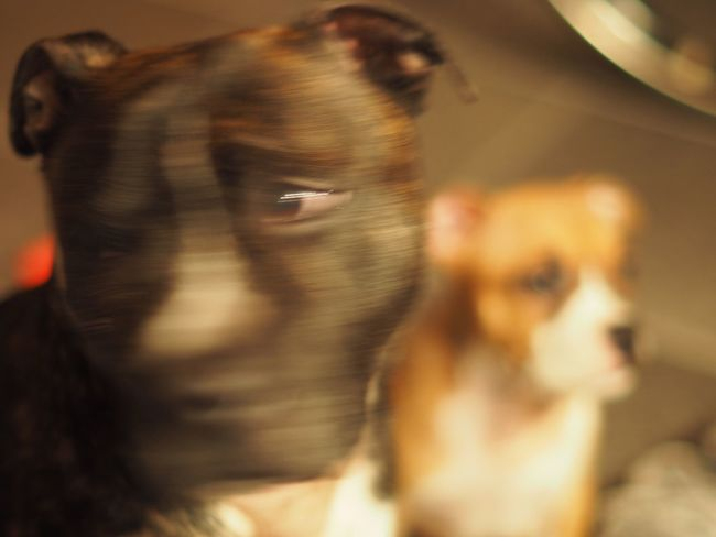 'Are you a human or a dog? -yes.'😬 Capturing Motion Capturingmotion Failed Photo