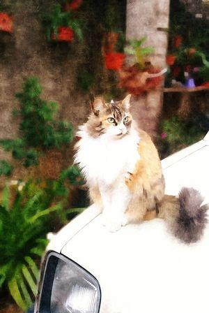 Car Cat Cat On A Car Standing Cat