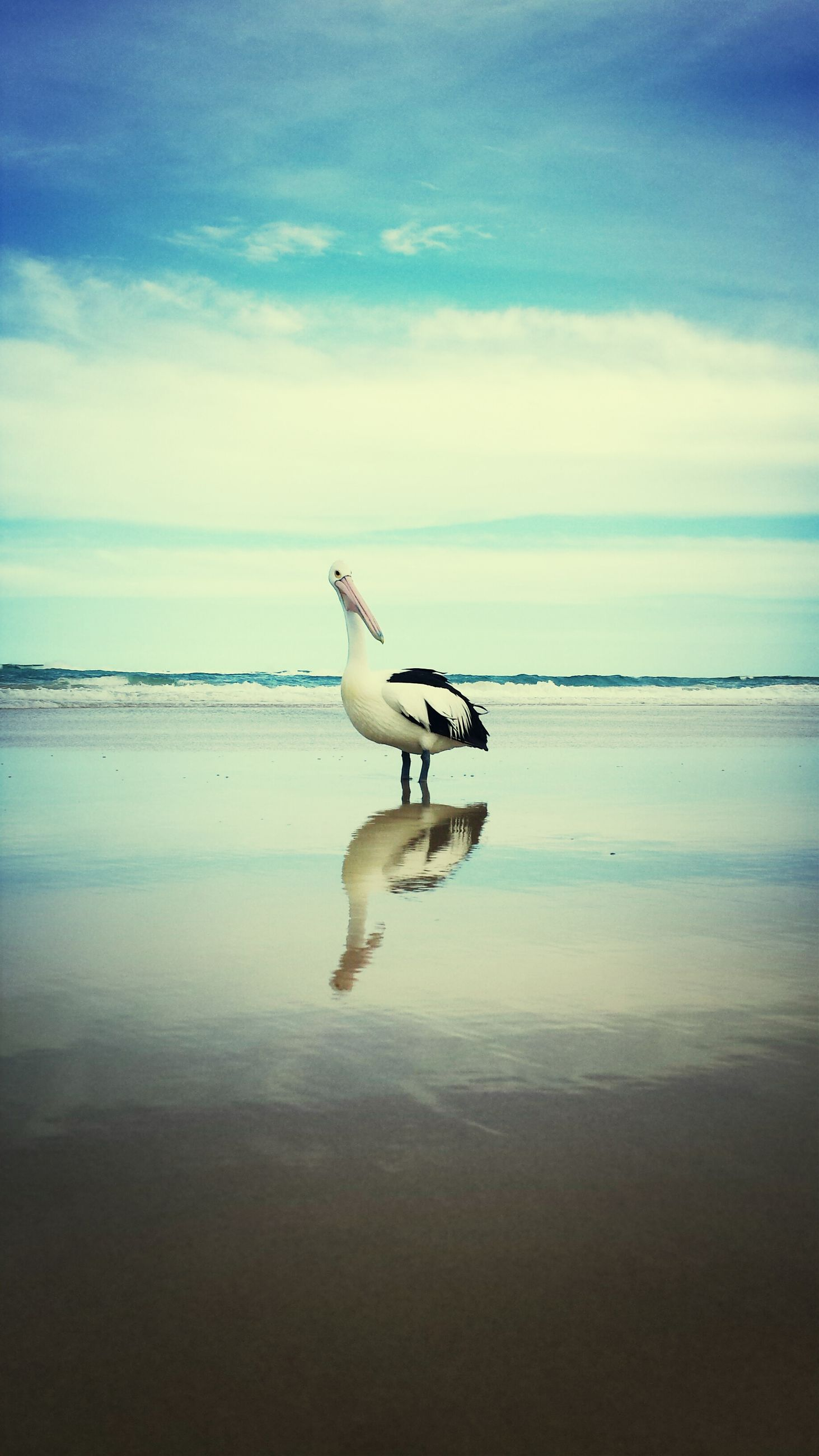 sea, animal themes, bird, water, seagull, horizon over water, beach, one animal, sky, animals in the wild, wildlife, shore, nature, beauty in nature, tranquil scene, tranquility, sand, scenics, cloud - sky, cloud