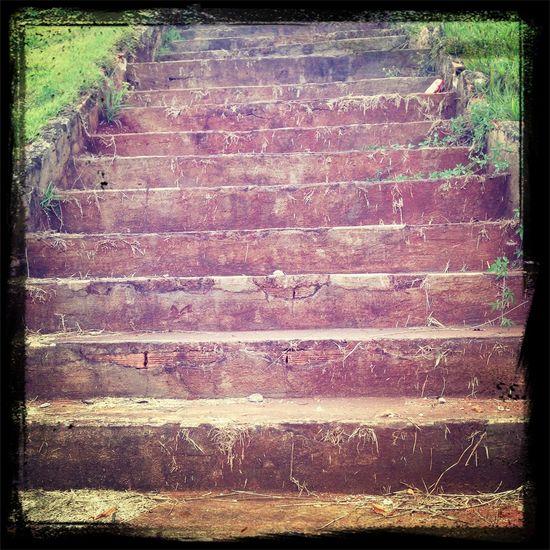 Green Grass Ladder Rise