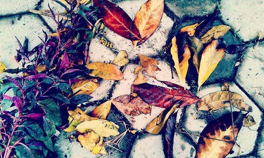 Good Morning Earth 😙🙆 Fotograferjomblo Anakikutikutan Anaksoksibuk Daun Love Flowers
