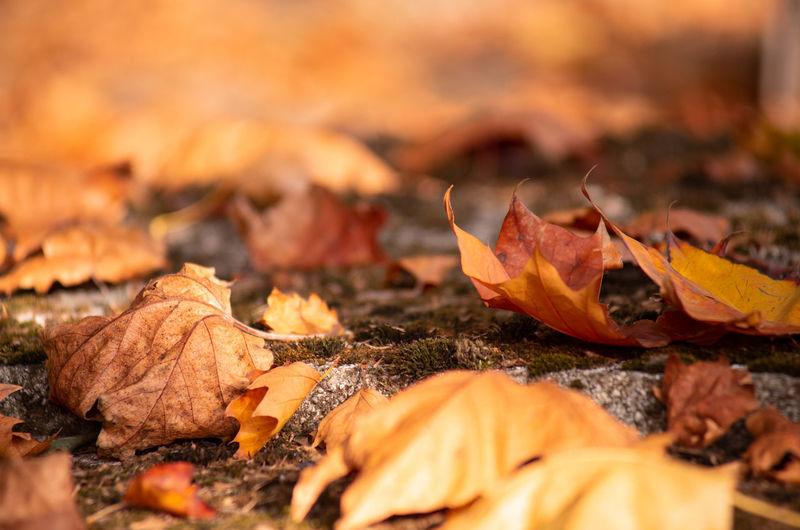 Leaf Dry Autumn