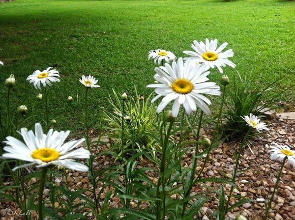 in the soft light of morning Flowersforfriends EyeEm Nature Lover