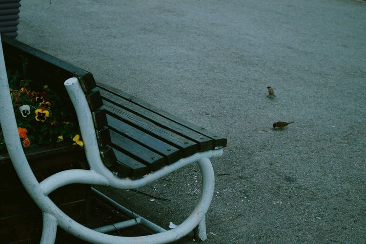 Bench Bird Park
