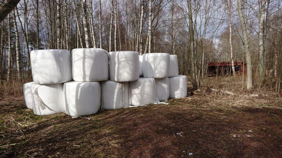 Showcase April Hay Bales Plastic Wrap Springtime