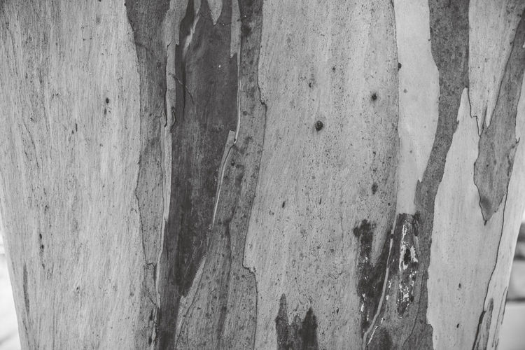 Textured  No People Full Frame Close-up Wood - Material Backgrounds Pattern Weathered Rough Day Wall - Building Feature Tree Trunk Outdoors Trunk Built Structure Old Tree Architecture Plank Detail Ruined Wallpaper Eyeemnaturelover