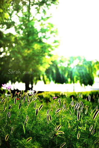 Lakeside Nature Photography Bundang Lake Park Korea 2008.07 Need Rest Green