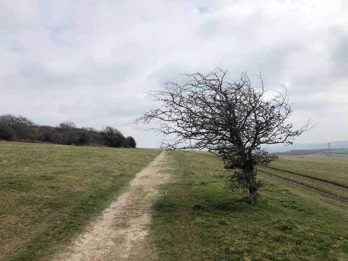 Hiking, South Downs 🇬🇧 Hiking Southdowns Field Agriculture Nature Growth Landscape Tranquility Sky Beauty In Nature Rural Scene Tree Cloud - Sky Outdoors Grass Tranquil Scene Scenics