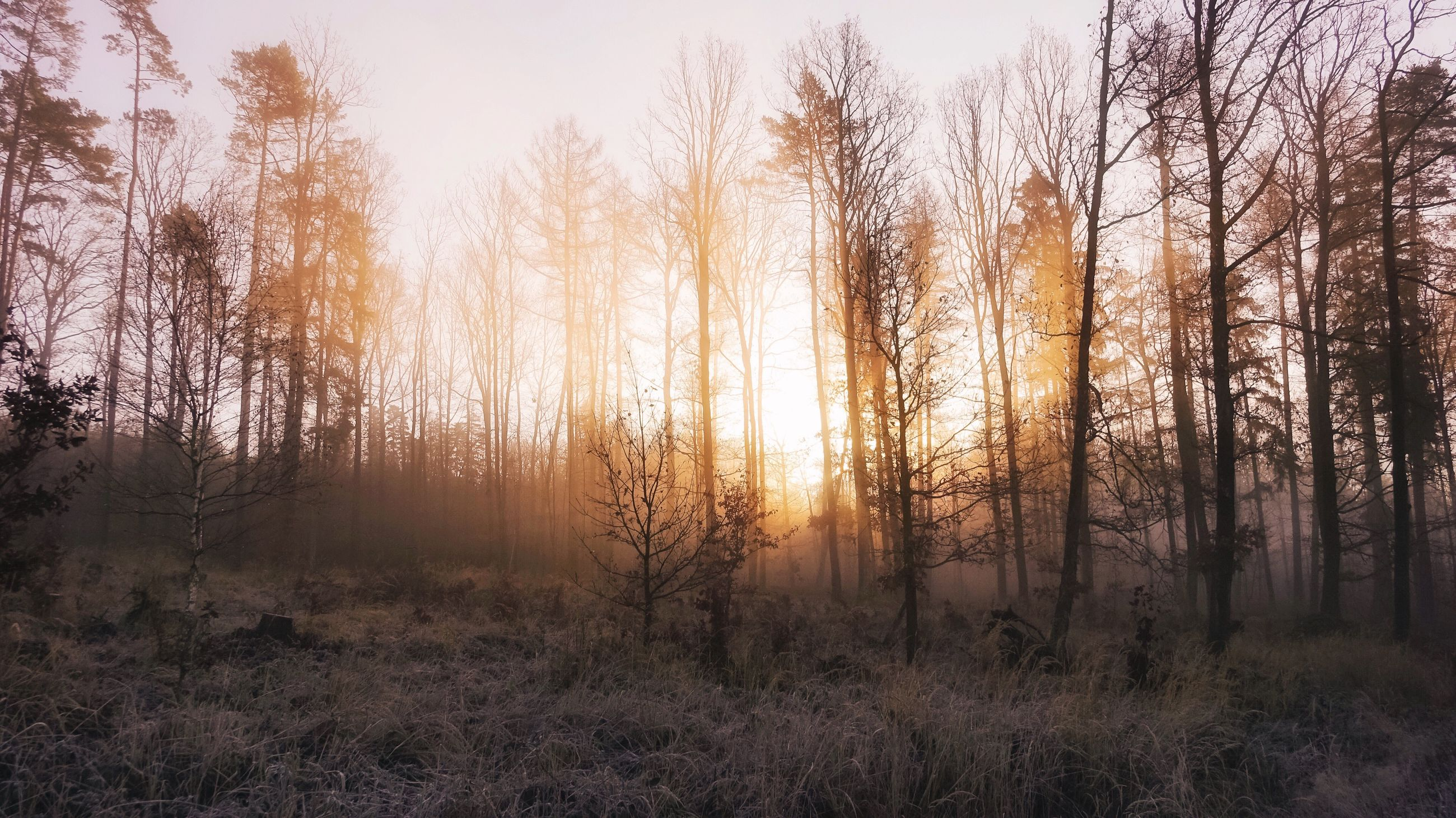 nature, sunset, tree, sky, non-urban scene, sunlight, landscape, forest, sun, no people, beauty in nature, outdoors, backgrounds, day