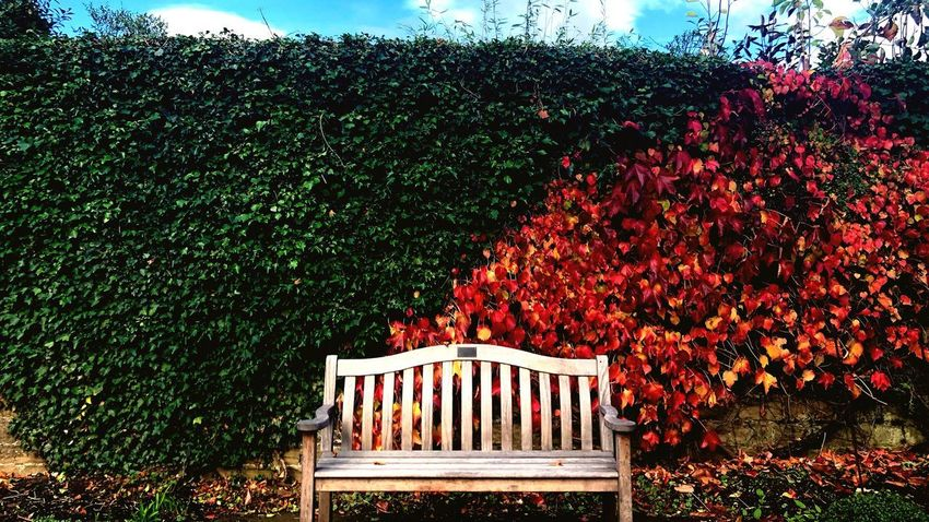 Autumn Leaves Autumn colors Autumn Bench Plant Tree Architecture Growth Nature Built Structure No People Outdoors Day Red Green Color Leaf Creeper Plant Ivy Autumn