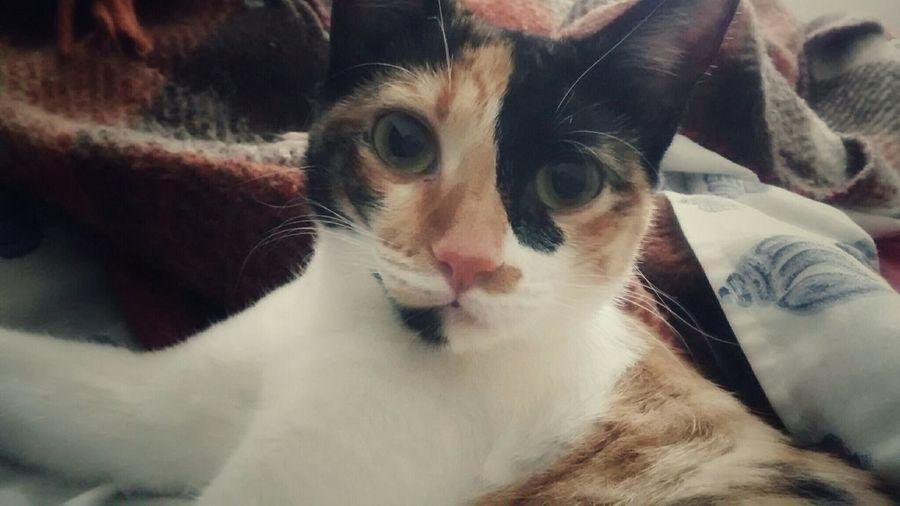 Sophia, the cat