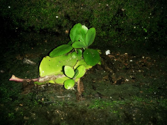 Nature Nature Leaf Water Green Color Growth Outdoors No People High Angle View Day Beauty In Nature Plant Floating On Water Water Lily Close-up Freshness Lily Pad Fragility The Great Outdoors - 2018 EyeEm Awards