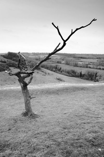 Dead Tree On The Hill Tree Plant Tranquility Environment Tranquil Scene Sky Land Landscape Nature No People Day Scenics - Nature Beauty In Nature Field Bare Tree Tree Trunk Outdoors Trunk Blackandwhite Black And White