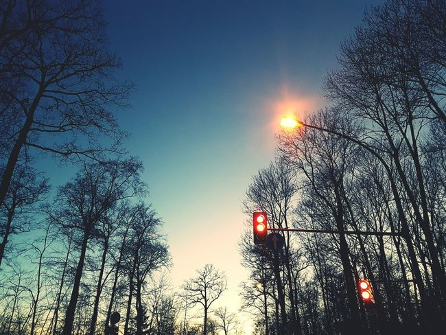 Tree Sky Nature Sunset Beauty In Nature Low Angle View Silhouette Sun Branch No People Tranquility Outdoors Traffic Lights Traffic Sign Sunset_collection Tranquility First Eyeem Photo EyeEm Taking Photos On The Road Eyeem0711 Growth Tree Illuminated Day