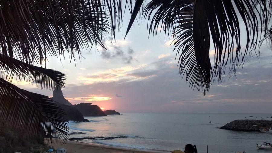 Porto Santo Antônio Beach Tree Sea Cloud - Sky Sunset Water Nature