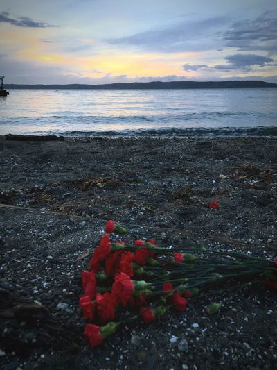 Sea Water Scenics Tranquility Horizon Over Water Sunset Tranquil Scene Red No People Outdoors Beach Carnation Carnation Flowers Bouquet Abandoned Sunset Over Water Sunset On The Beach Pacific Northwest  Pacific Coast Washington Washington State Seattle Sea Level Seascape Sea And Sky