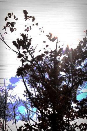 Good Morning Beautiful People Treegasmic Tuesday NEM Painterly NEM Good Karma