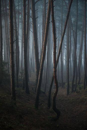Fog in the wilderness forest. autumn misty landscape.