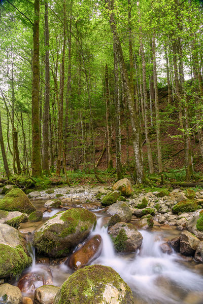 Green Green Color Nature Nikon Nikon D810 WoodLand Forest Landscape Landscape_photography Outdoors River Strömung Switzerland Toggenburg Wasserfall Water Waterfall
