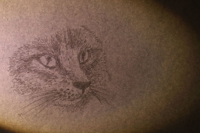 The face of cat wrote by pencil on white paper Diamond Eyes  Textures Animal Animal Themes Black And White Cat Close-up Cute Day Domestic Animals Drawing Fur Ideas Indoors  Lazy Animal Long Mustache Long Tail Mammal Nature No People One Animal Pets Portrait Relaxation Texture